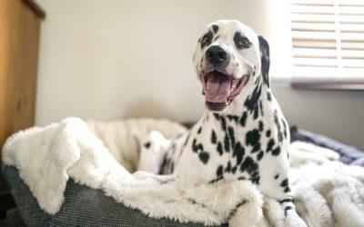 Din hund fortjener høj livskvalitet